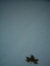 2005_bec_hellouin_neige_3_feuilles_en_pe