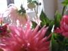 2006_bernay_appart_bouquet_gros_plan