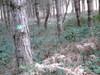 2006_plasnes_pinde_troncs_tches_vertes