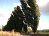 2006_sahurs_arbres_inclins