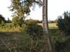 2006_sahurs_poteau_torve