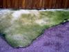 2007_villerville_sol_et_bitume_violet