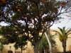 2008_maroc_rabat_48