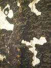 Saint_maclou_nocturne_grafitti_iii