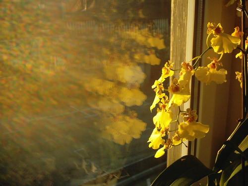 2005_bernay_appart_orchide_irise_dans_re