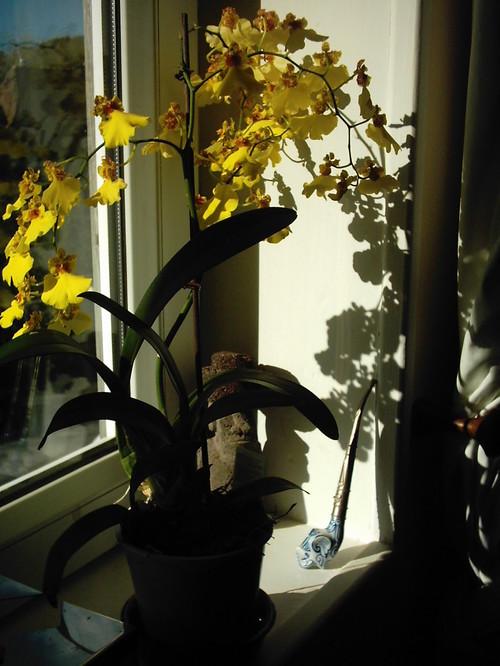 2005_bernay_appart_orchide_jaune_ombre_p