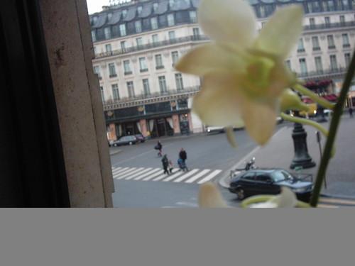 2004_paris_caf_celio_fleur_perspective_p_2