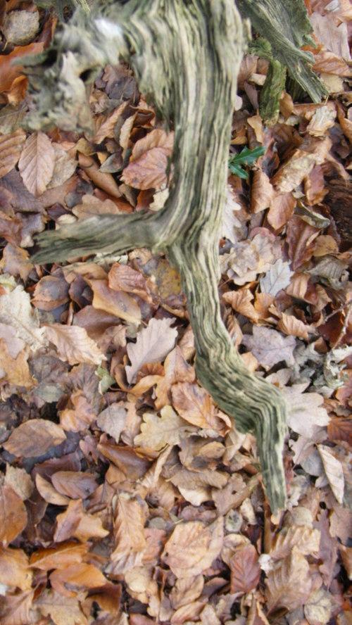 2005_malouve_serpent_souche_feuilles