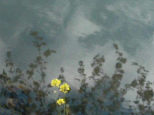 2005_beaumesnil_fleur_jaune_sur_brume_la