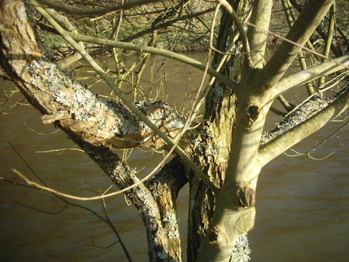 2006_st_quentin_branches_sur_fond_rivire
