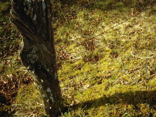 2006_st_quentin_poteau_barbel_mousse_au_